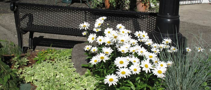 spring740_5.jpg